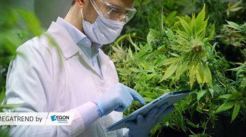 Kannabisz, mint befektetés kép