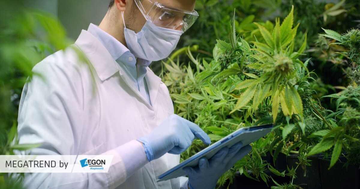 Kannabisz, mint befektetés