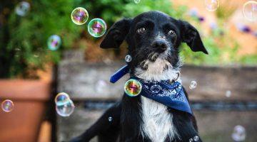 400 kutyát adott örökbe az Aegon Alapkezelő által támogatott alapítvány kép